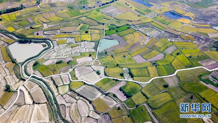 (新華全媒頭條·圖文互動)(8)希望灑在金色田野——寫在鄉村振興戰略實施一周年之際