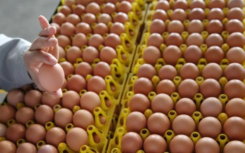 每年生产5660亿个鸡蛋,中国为什么能?