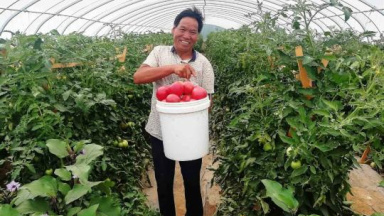 Greenhouses produce steady income for villagers