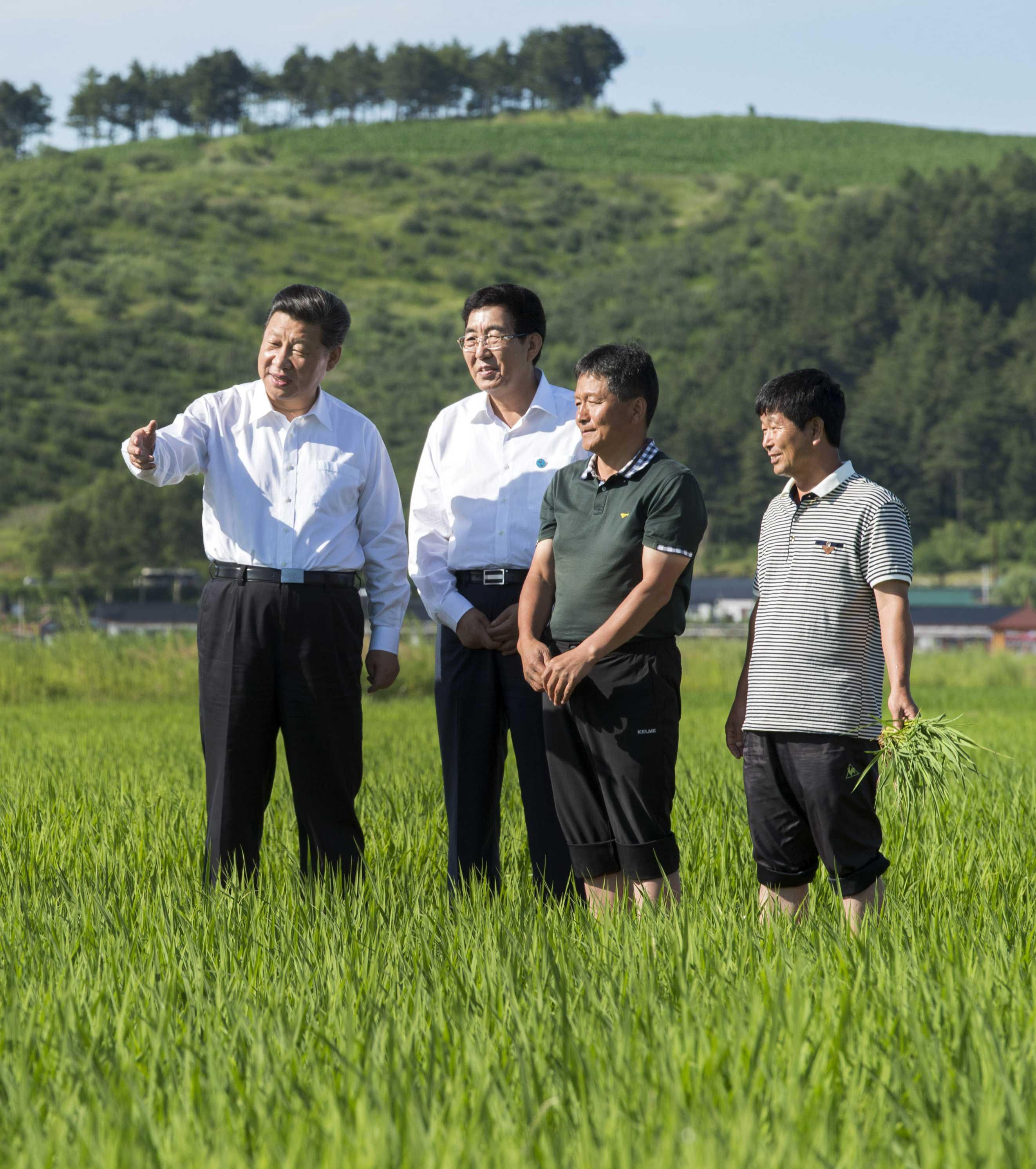 2015年7月16日,习近平总书记在吉林省延边州和龙市东城镇光东村视察水稻长势。